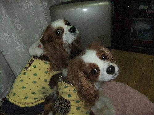 2009_1117マロン&ミント0021.JPG