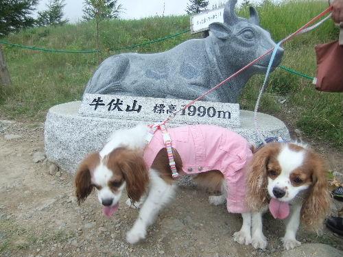 2010_0819マロン&ミント0039.JPG